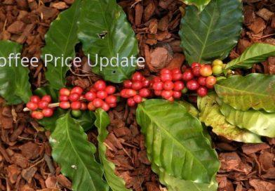 Coffee Prices (Karnataka) on 13-12-2017