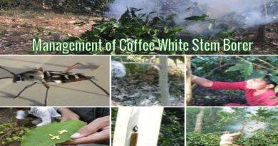 Management of Coffee White Stem Borer