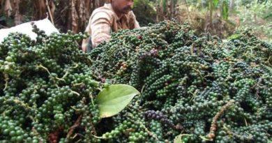 Black Pepper Spot Prices 22-Sep-18