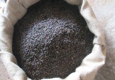 Vietnam pepper hits demand in north indian markets