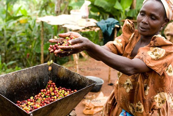 Coffee jumps 4% on supply chain worries due to the coronavirus