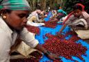 Arabica coffee hits highest in more than 2 weeks