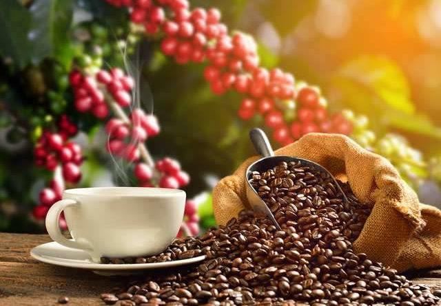Arabica coffee futures fell on Brazil rains