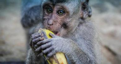 ಮಂಗನ ಕಾಯಿಲೆ:ಮಲೆನಾಡಿನಲ್ಲಿ ನೆಲಕಚ್ಚಿದ ಕೃಷಿ