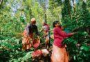ಅರೇಬಿಕಾ ತೋಟದಲ್ಲಿ ಫೆಬ್ರವರಿ -ಮಾರ್ಚ್ ತಿಂಗಳುಗಳಲ್ಲಿ ಅನುಸರಿಸಬೇಕಾದ ಕಾರ್ಯಚಟುವಟಿಕೆಗಳು