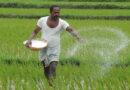 ಡಿಎಪಿ ರಸಗೊಬ್ಬರ: ಸಬ್ಸಿಡಿ ಮೊತ್ತ ₹ 1,200ಕ್ಕೆ ಹೆಚ್ಚಳ